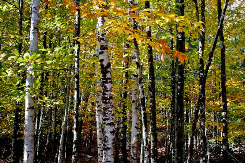19-Acadia Wild Gardens-5985