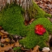14-Acadia Wild Gardens-5827