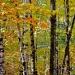 20-Acadia Wild Gardens-6001
