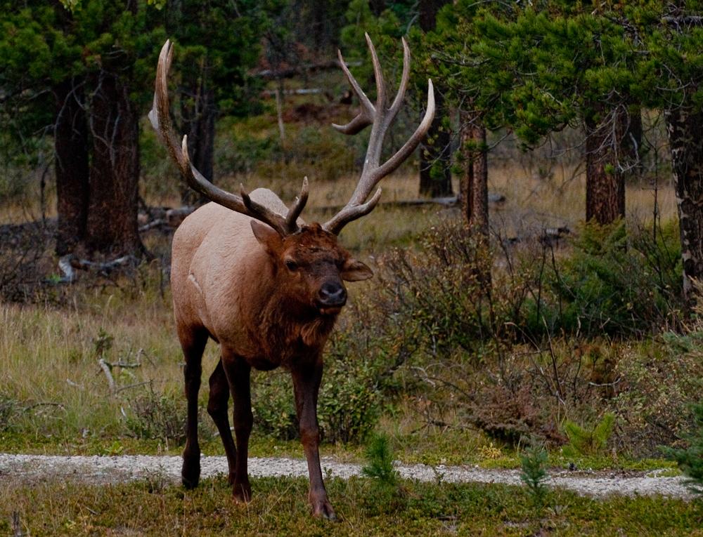 Elk_701558_jasper_house