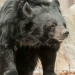 5928_moon_bear_zoo_roger_williams_park_-20140323
