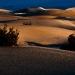 Mesquite_Dunes_1010