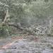 hurricane-irene-barrington-01524