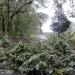 hurricane-irene-barrington-01529