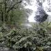 hurricane-irene-barrington-01529