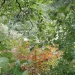 hurricane-irene-barrington-01530