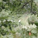 hurricane-irene-barrington-01531