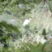 hurricane-irene-barrington-01532