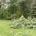 hurricane-irene-barrington-01537
