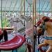 Carousel horse closeup 6118