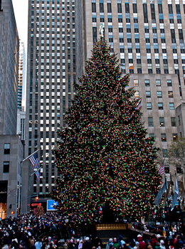 2922 City Scape Rockerfeller center bus tour