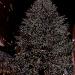 2740 Rockerfeller Christmas tree