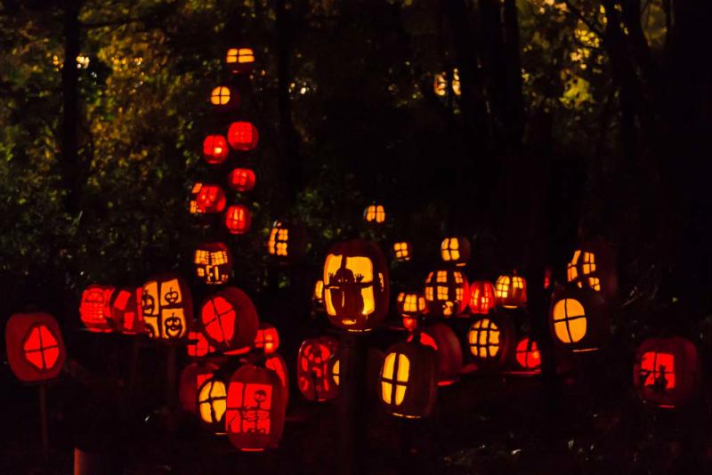 6099_Carved_Pumpkins_RWP