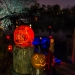 6149_Carved_Pumpkins_RWP