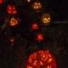 6278_rwp_pumpkins_201310018