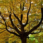 Fall Foliage – New England