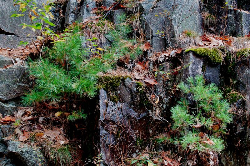 13-Acadia National Park-5862