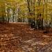 05-Acadia National Park-6018