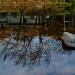 17-Acadia Wild Gardens-5795