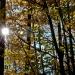 18-Acadia Wild Gardens-5976