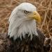 5987_eagle_zoo_roger_williams_park_-20140323