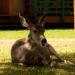 Deer_waterton_lakes_200193