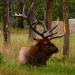 Elk_701302_jasper_house