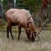 Elk_701584_jasper_house