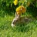 Rabbit-0041