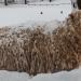 Sheep_in-winter_0571