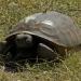 turtle-20048