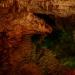 424_1291_berm_cave_animal_20130517