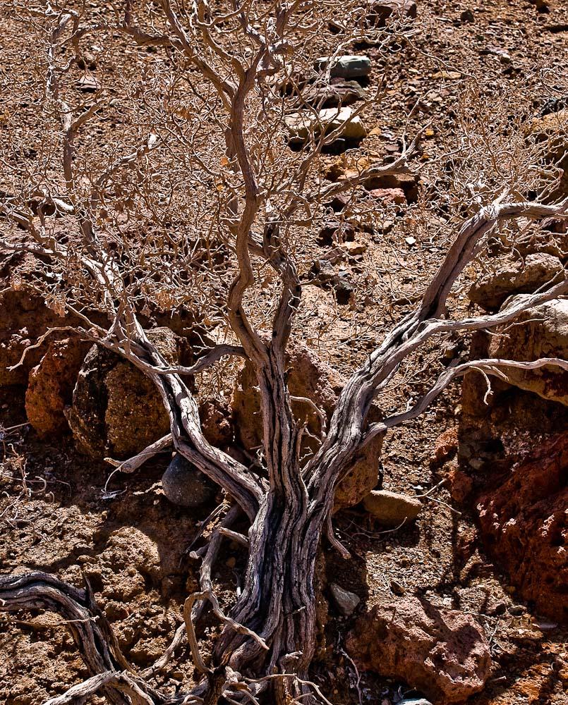 Desolation_Canyon_1680