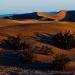 Mesquite_Dunes_1000
