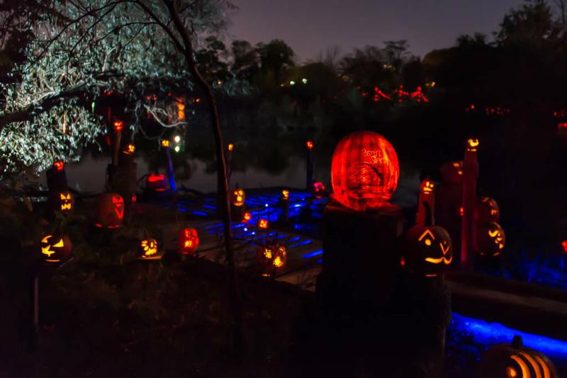 6148_Carved_Pumpkins_RWP