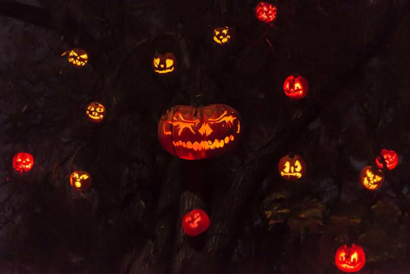 6274_rwp_pumpkins_201310018