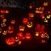 6267_rwp_pumpkins_201310018